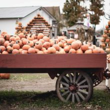 Fall Festivals and Pumpkin Patches – it's Fall, Y'all!